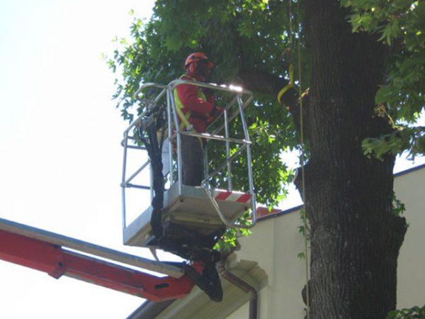 cestello elevatore manutenzione verde